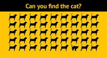 Про котів іматематику, або Магія Computer Vision