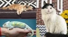 Собака, кот, улитка ихамелеон: какие животные обитают вофисах ИТ-компаний