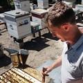 DOU Hobby: Пчеловодство— размеренный отдых и40кг меда