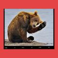 DevOps. Мынекормим медведей!