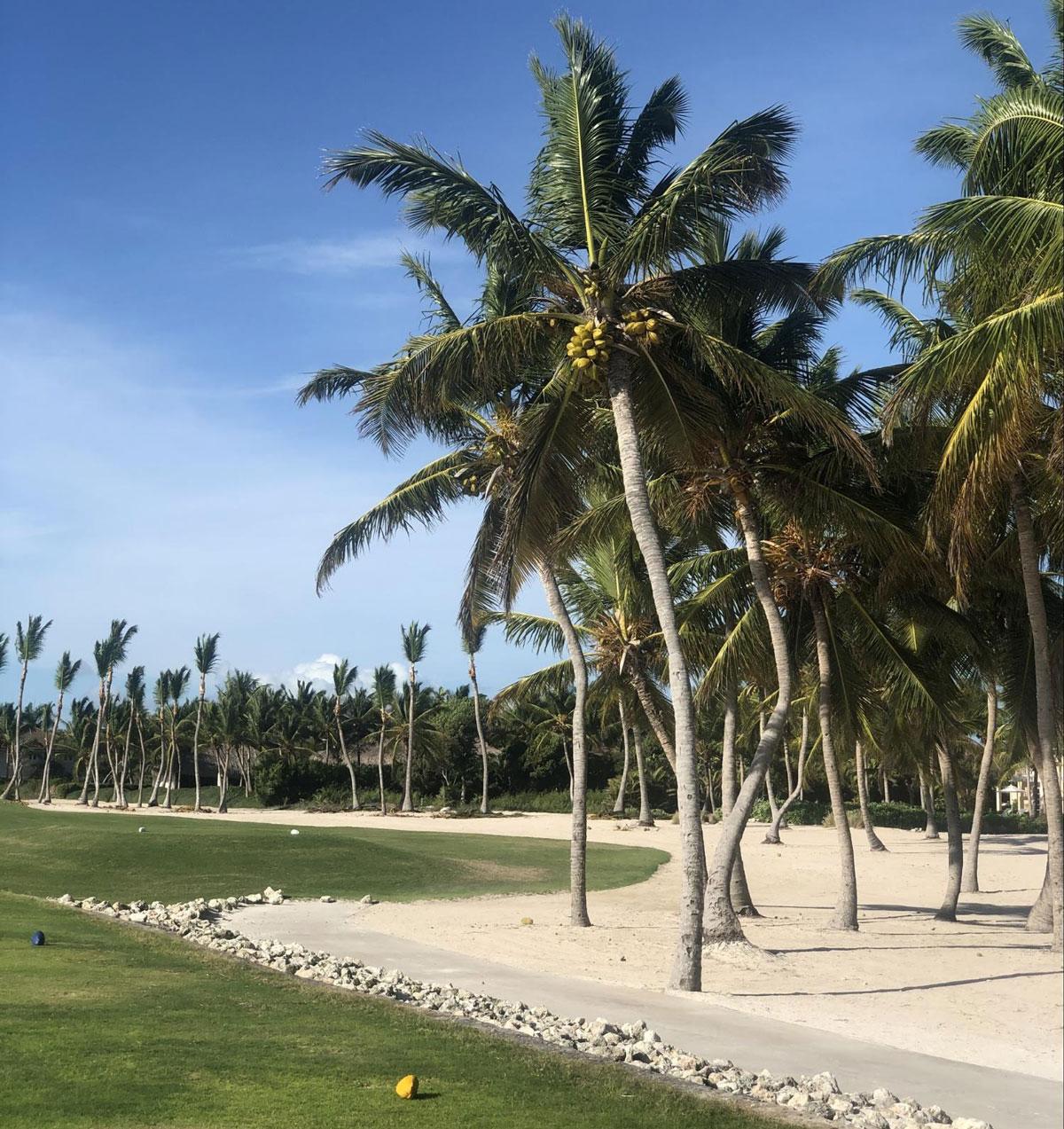 Під час прогулянок любимо збирати кокоси